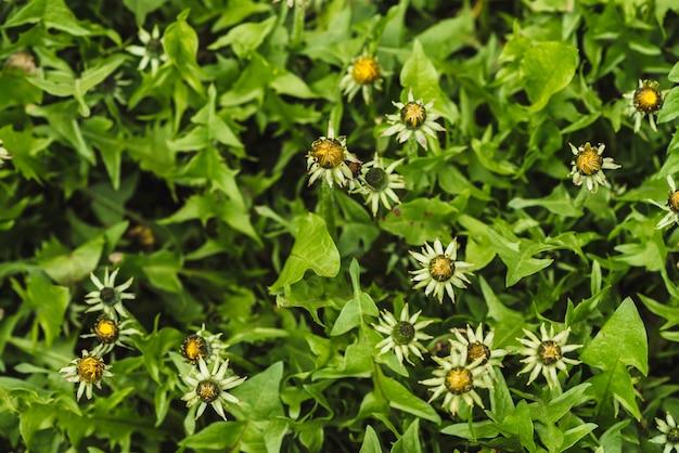 Группа желтых одуванчиков на зеленой лужайке