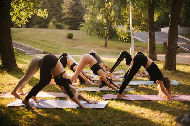 やっている若いスポーティーな人々のグループは、夏の晴れた朝の夜明けに都市公園でヨガのポーズadho mukhasvanasanaです。若い女性のグループは瞑想活動をしています