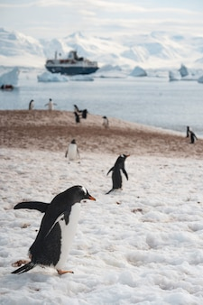 Group of penguins walking on the frozen beach