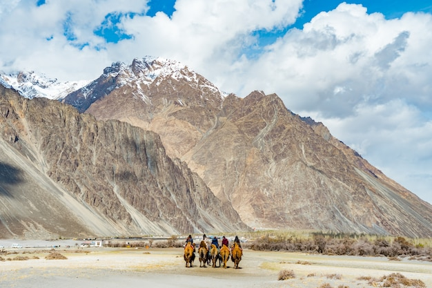 A group of people enjoy riding a camel walking on a sand dune in hunder, hunder is a village in the leh district of jammu and kashmir, india.