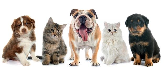 Group of pet Premium Photo