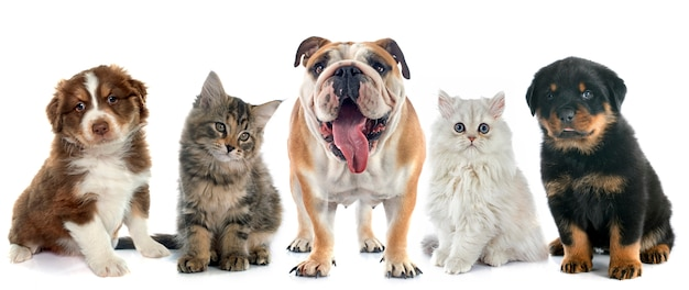 What Do You Do When Your Pet is Obese?