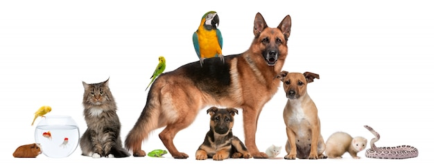 Group of pets dogs cats reptile bird isolated