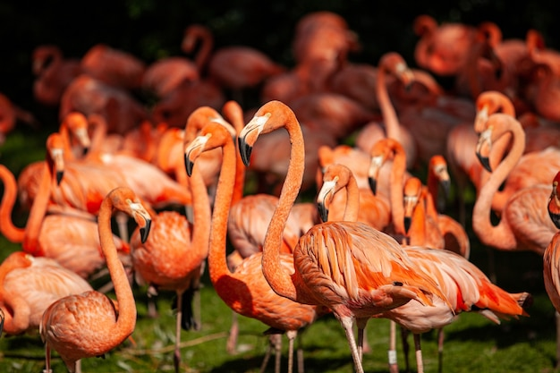 Group of pink flamingos on a green meadow