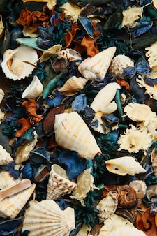 Group of potpourri and shell