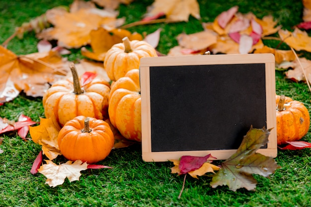Group of pumpkins and blackboard on green lawn