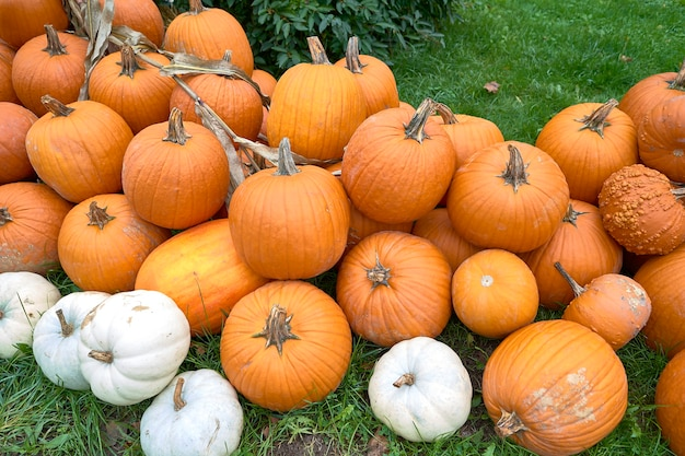 Group of pumpkins of different colors.halloween staff