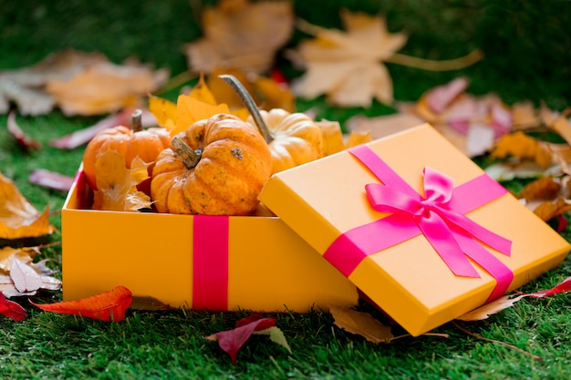 Group of pumpkins and gift box on green lawn
