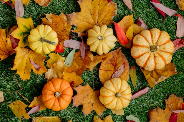 Group of pumpkins and leaves on green lawn