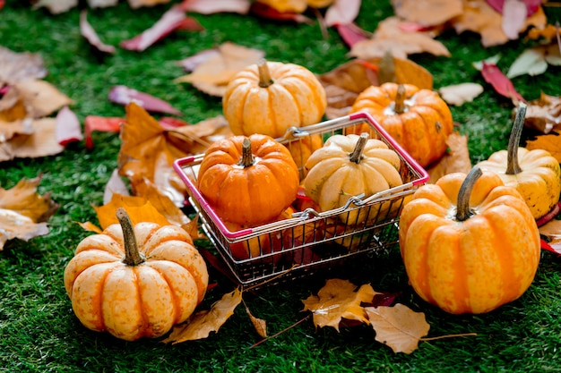 Group of pumpkins and supermarket basket on green lawn