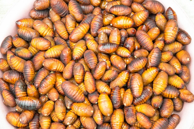 Group pupa brown.