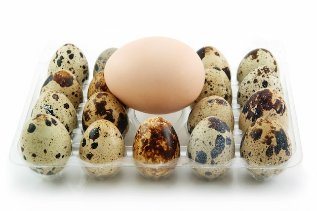 Group of raw quail eggs in box isolated on white