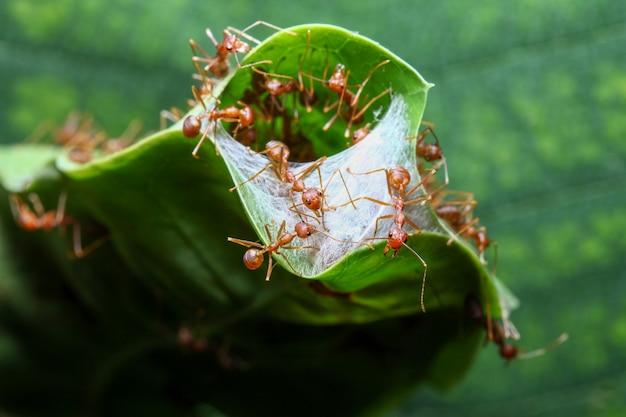 緑の葉から赤と巣の建物をグループ化
