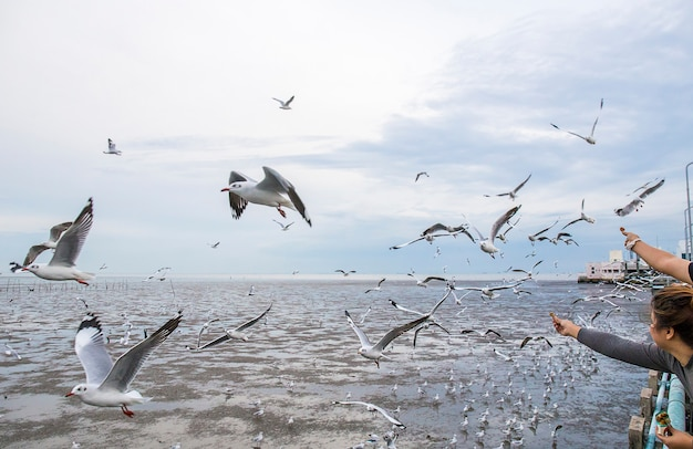 Group of seagull bird are flying.