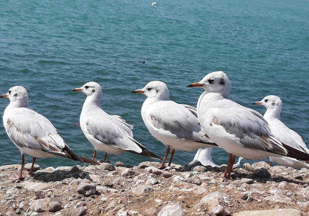 Group of seagulls perched on a rocky surface near the sea