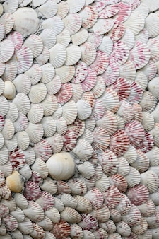 Group of shellfish and clam detaill texture background