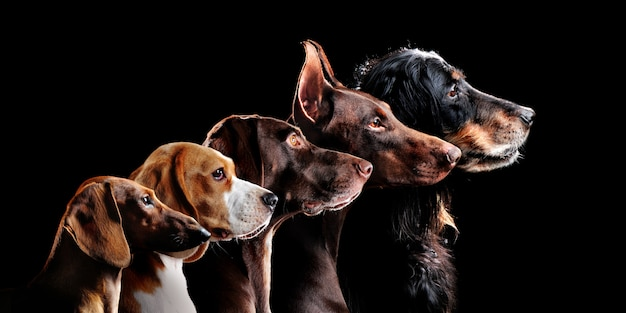 Group side view portrait of dog of different breeds