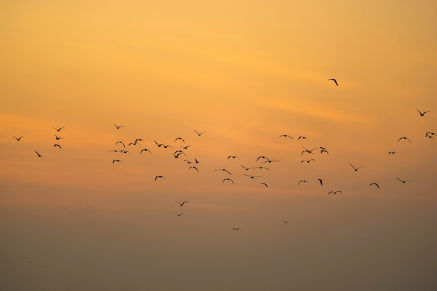 Group of silhouette seagulls flying over the sea in the morning.