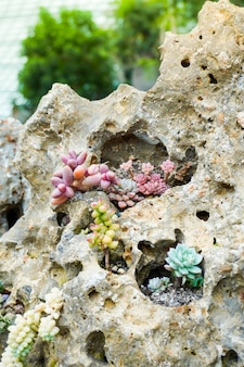 Group of succulent plants that grows on soil and gravel