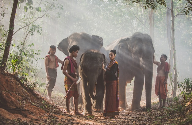 Group of thai shepherds in the jungle with  elephants. historic lifestyle moments from thailand culture
