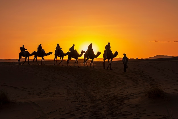 A group of tourist led by a local beduin guide riding camels to the desert camp in sahara . sunset , golden hour
