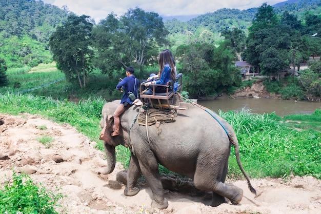 森林の象に乗るグループの観光客チェンマイ、タイ