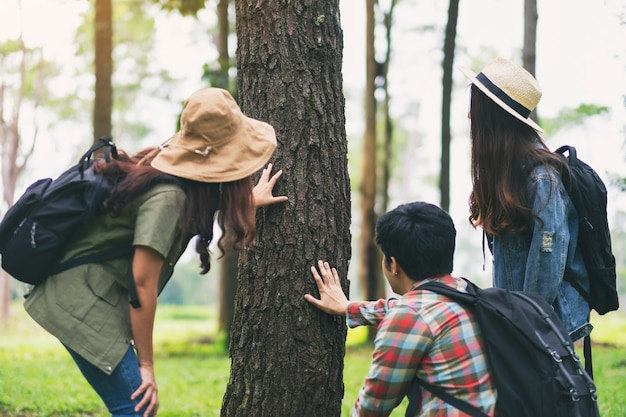 A group of travelers hiking and exploring a beautiful pine tree in the forest