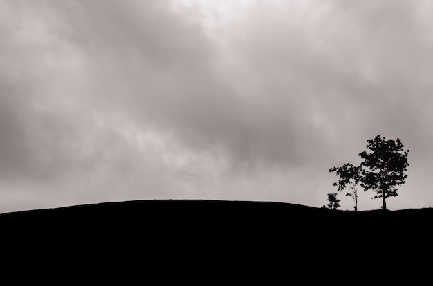A group of trees left in the mountain with dark cloud.