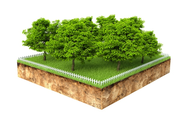 Group of trees on a piece of land