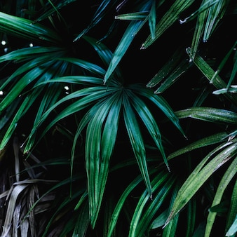 Group of tropical green leaves