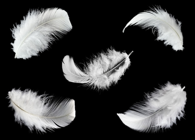 Group of white feathers isolated on black background.