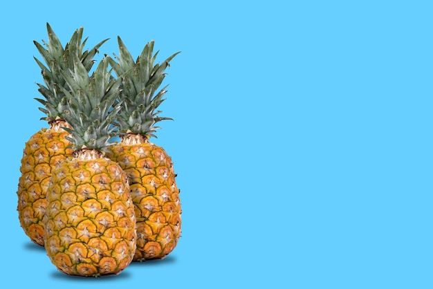 Group of whole and fresh pineapples with blue background and lateral space for text