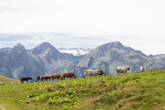 A group of wild horses and cows walking in the mountains