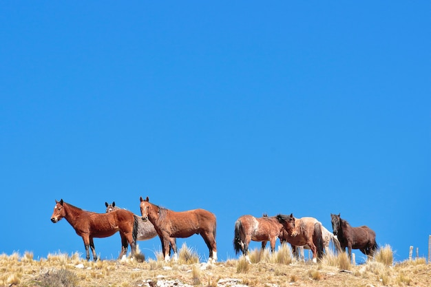 Group of wild horses grazing on the hill