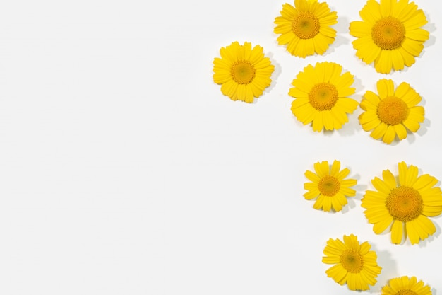 Group of yellow daisy flower isolated on white background. spring composition frame. copy space