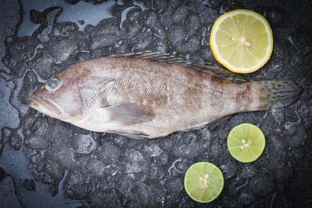 Grouper fish on ice with lemon