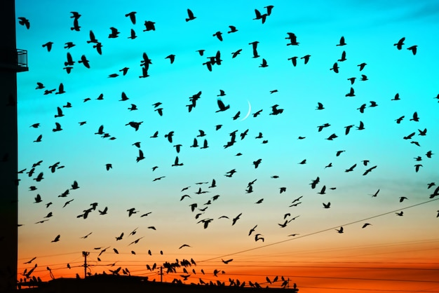 Groups of birds flying above roof at sunset on moon background. birds silhouettes above building silhouettes.