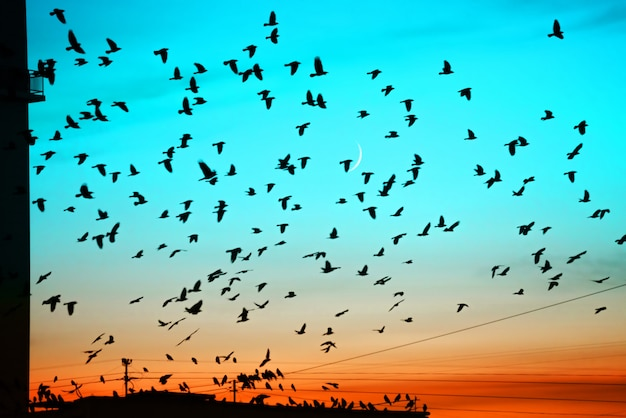 Groups of birds flying above roof at sunset on moon background.