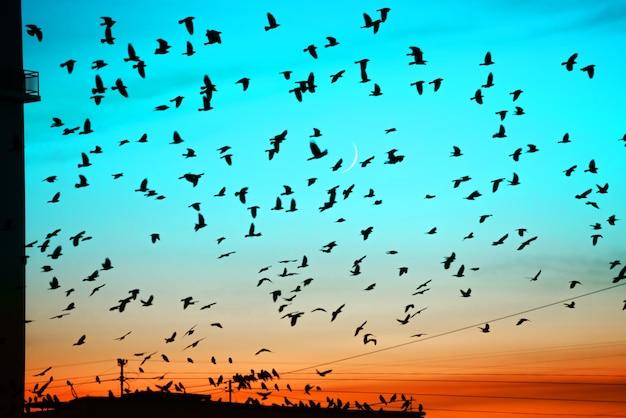 月の背景に日没時に屋根の上を飛んでいる鳥のグループ。建物のシルエットの上の鳥のシルエット。
