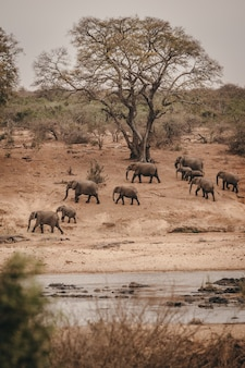 Groups of wild elephants in an african safari park
