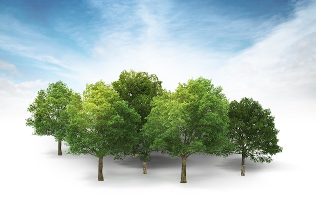 Grove isolated on white with blue sky and clouds background