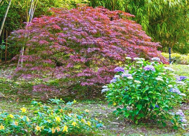 竹の木の林、ピンクのアーバスクルの木と花が目の前に