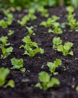季節の野菜や果物の水を育て、植物や木の野菜を植え替えます