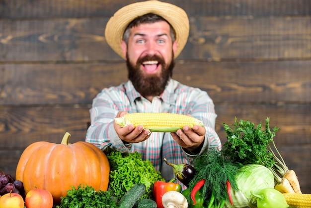有機作物を育てます。コミュニティガーデンと農場。健康的な生活様式。農民はトウモロコシの穂軸またはトウモロコシの木の背景を保持します。有機自家製野菜を紹介する農家。自家製の有機収穫の利点。