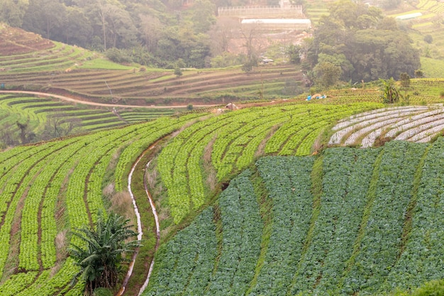 Grow vegetables in the mountains of thailand,copy space.