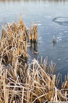 По берегу озера или реки росли сухие сломанные тростники, покрытые снегом и льдом, вода замерзла.
