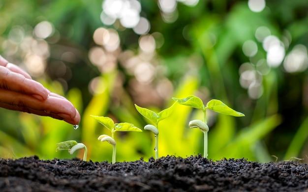 Выращивание сельскохозяйственных культур на плодородной почве и полив растений, включая демонстрацию этапов роста растений, концепций выращивания и инвестиций для фермеров.