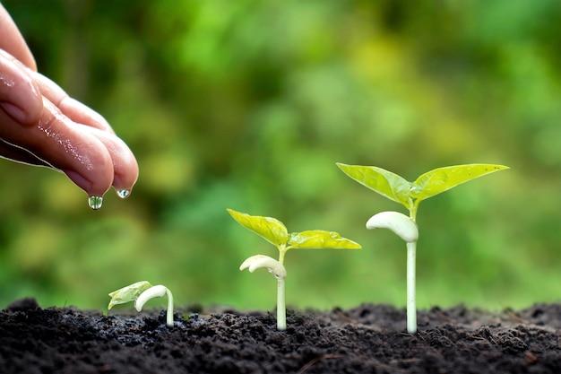 비옥 한 토양에서 작물을 재배하고 식물 성장 단계, 작물 재배 개념 및 농부에 대한 투자를 보여주는 것을 포함합니다.