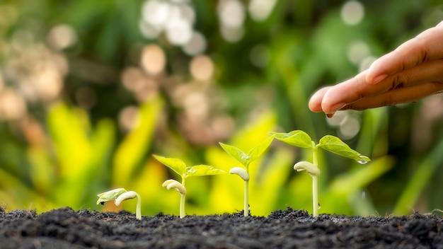 肥沃な土壌と水やり植物で作物を育てる