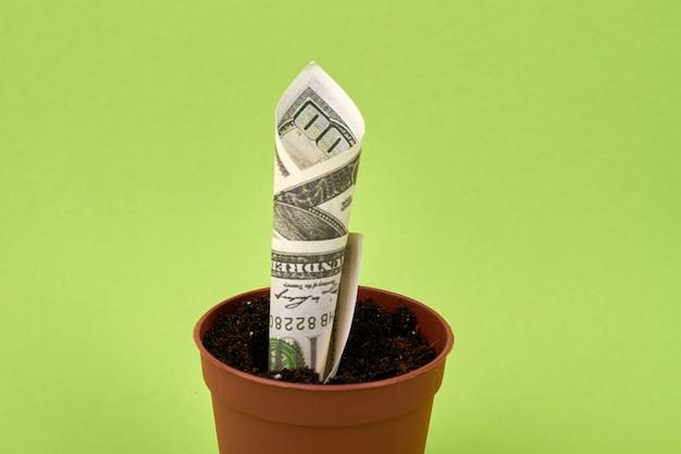 植木鉢から成長しているドル紙幣